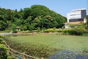 hikarimizu02.jpg